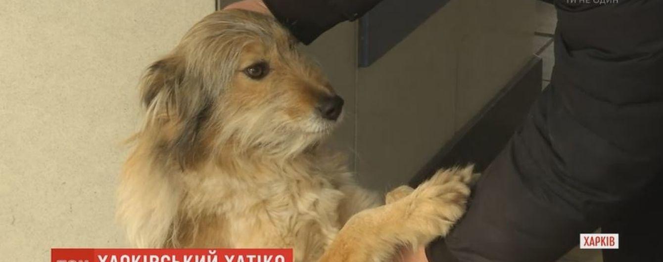 """У Харкові на авіазаводі живе місцева """"Хатіко"""", яка вже 4 роки чекає на господаря"""