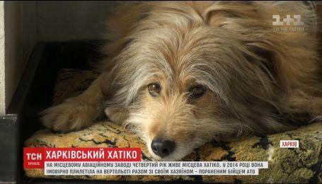 """У Харкові на авіаційному заводі живе український """"Хатіко"""""""