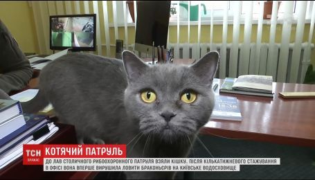 В Киеве британскую кошку Асю официально трудоустроили в рыбоохранный патруль