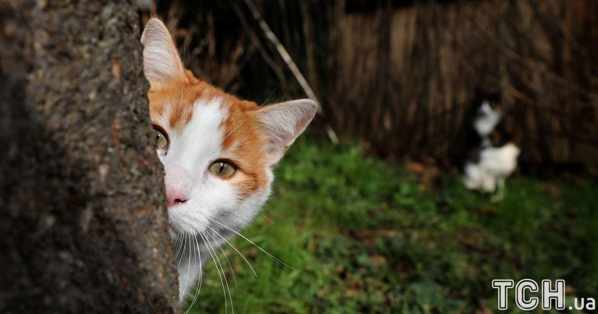 Різноокі та зухвалі. Reuters показало життя чотирилапих у котячій столиці Стамбулі