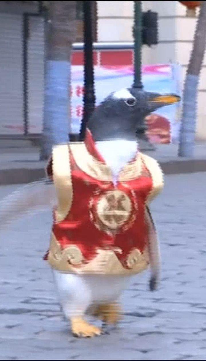 Пингвины в центре мегаполиса. Птицы поздравили китайцев с наступающим Новым годом