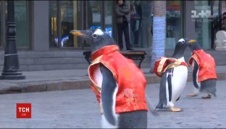 Пингвины в центре мегаполиса поздравили китайцев с наступающим Новым годом