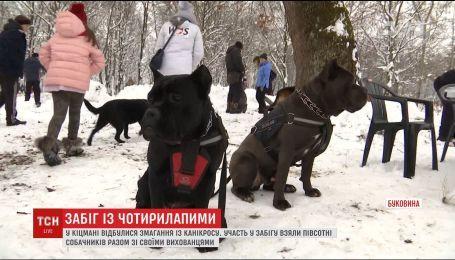 На Буковине собачки со своими хозяевами бежали кросс наперегонки