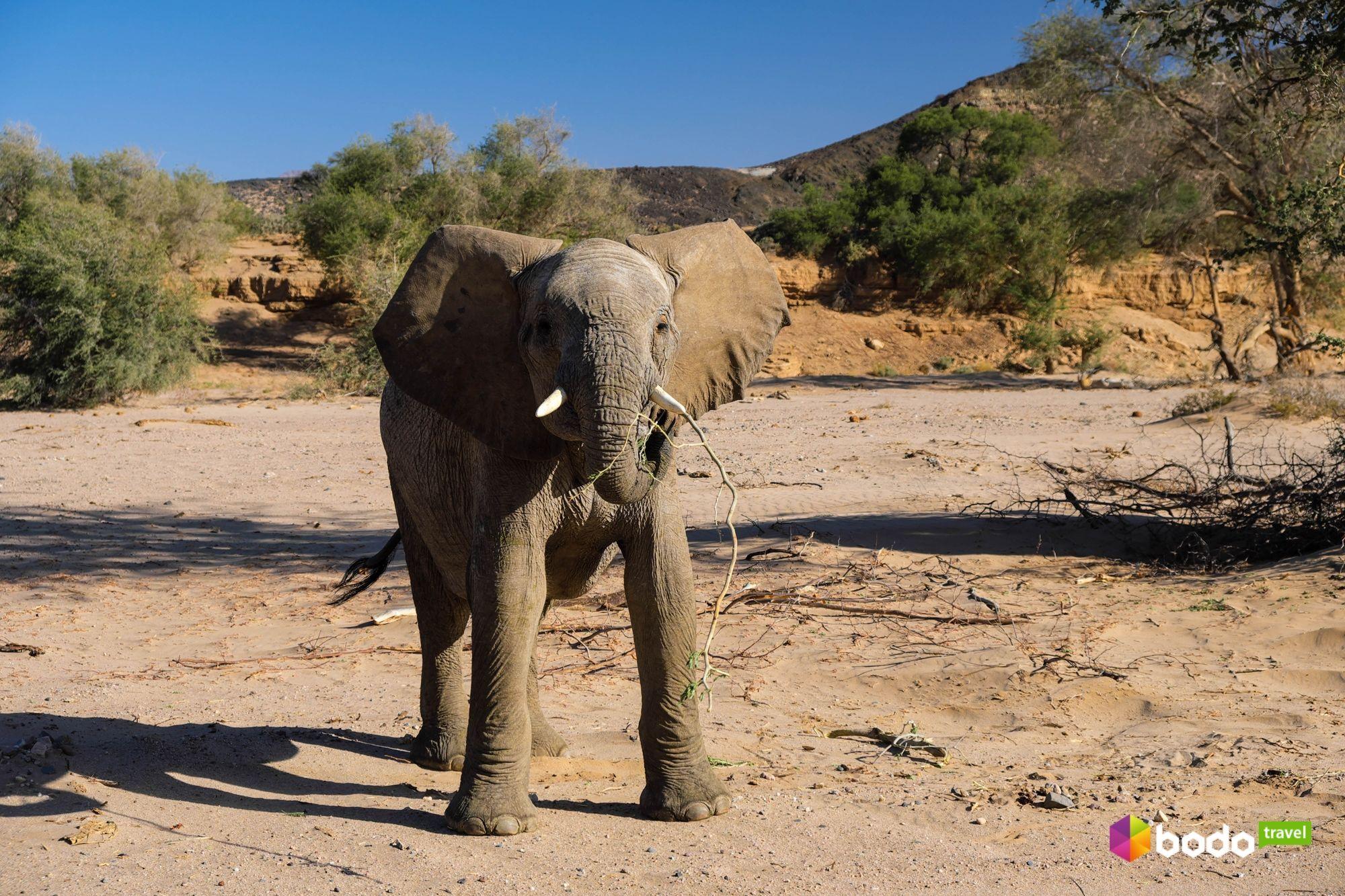 намібія  слон