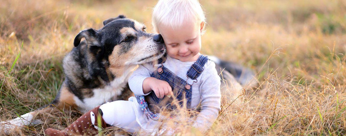 Конспект игрового занятия «Собака» для детей 2-го года жизни | 530x1340