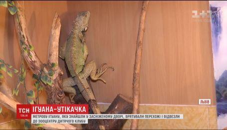 У Львові біля смітника знайшли метрову ящірку