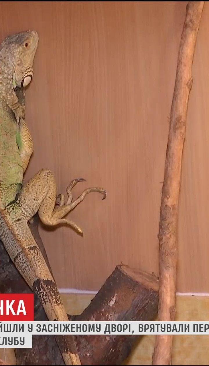 Во Львове возле мусорника нашли метровую ящерицу