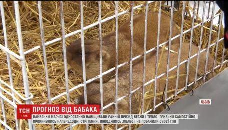 Во Львове сурки сделали свой прогноз на приход тепла в Украину