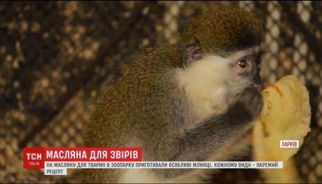 Работники Харьковского зоопарка устроили Масленицу для животных