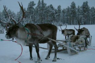 Долгий перелет и такси за 800 гривен: как из Киева добраться в дом настоящего Санта-Клауса
