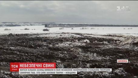 На Буковині поблизу людських паїв захоронили кілька тисяч мертвих свинячих туш