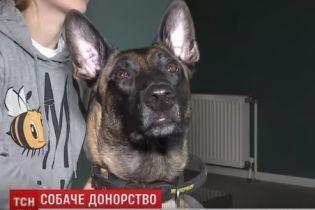 В Украине владельцы собак-доноров группируются в соцсетях, чтобы спасать собачьи жизни