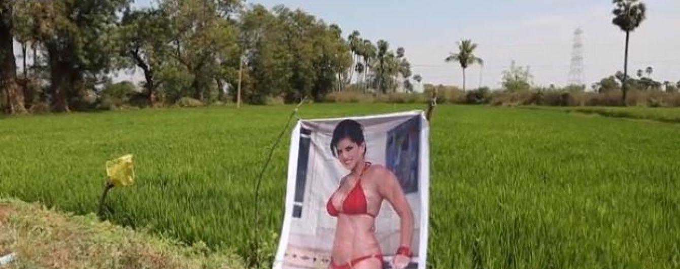Індійський фермер виставив посеред поля фото порнозірки, щоб вберегти свій урожай