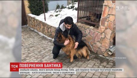 Счастливое возвращение Бантика. Похищенного в новогоднюю ночь собаку нашли