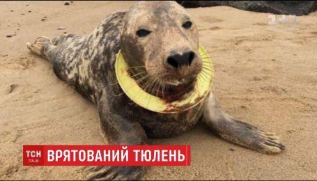 У Великій Британії врятували тюленя, який застряг у фрізбі