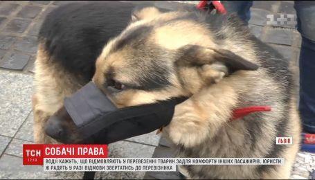 Во Львове водители отказывались взять в автобус собаку