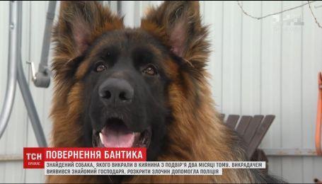 Господар знайшов свого собаку, якого викрали у новорічну ніч з подвір'я