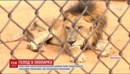 У Венесуельському зоопарку маленьких тварин можуть згодувати сильнішим