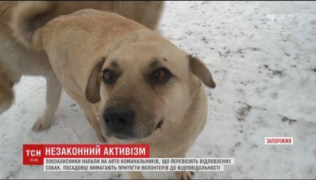 Зоозащитники разбили авто коммунальщиков, которые перевозили отловленных собак