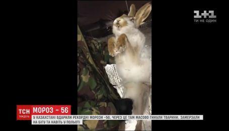 Рекордний для Казахстану градус морозу став причиною масової смерті тварин