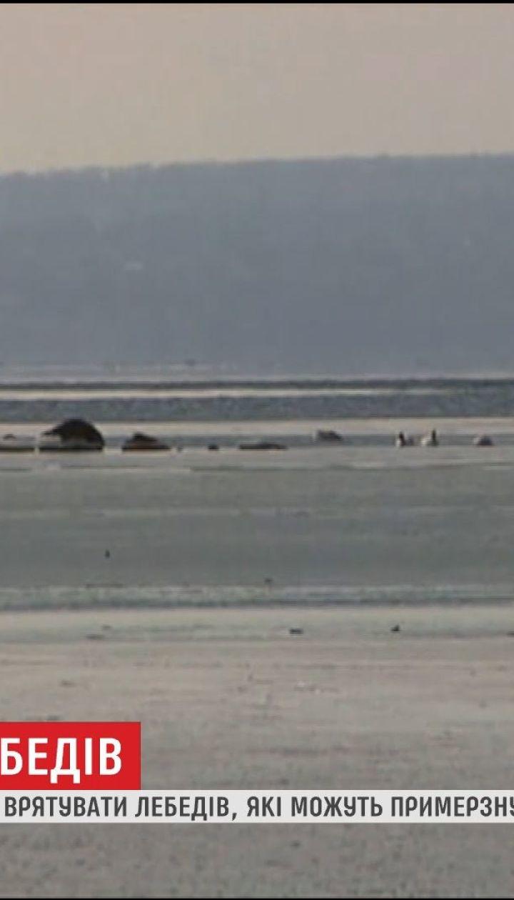 На водоймі в Кам'янському близько сотні птахів опинилися в крижаній пастці