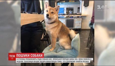 В Киеве люди поднялись на поиски щенка японской породы шиба-ину