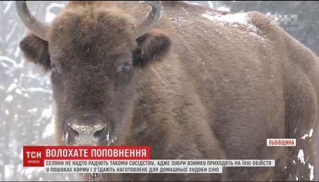 """Жителів декількох сіл насторожило народження п'ятьох зубренят у парку """"Сколівські Бескиди"""""""