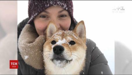 Девушка нашла пропавшую в столице собаку Ами в Черкасской области