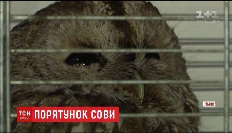 Львів'янин врятував травмовану сову, що ризикувала потрапити під колеса авто