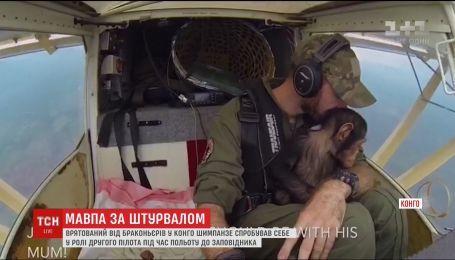 Спасенный от браконьеров шимпанзе совершил впечатляющее путешествие на самолете