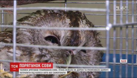 Травмированная сова выжила благодаря жителю Львова, который подобрал ее на дороге