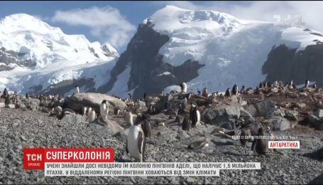 Ученые нашли огромное поселение пингвинов Адели у берегов Антарктики