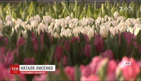 """В оранжереях """"Киевзеленстроя"""" расцвело более 70 тысяч тюльпанов"""