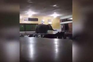 В малайзийскую школу забрел слоненок и бродил по столовой