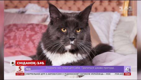 """В гостях """"Сніданка"""" крупнейший кот в Украине Ньютон и его хозяин Антон"""