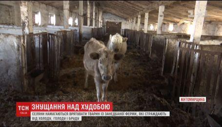 Селяне на Житомирщине пытаются спасти животных из запущенной фермы