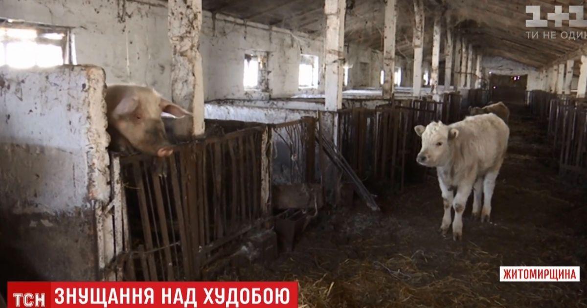 Фермер покинув десятки тварин помирати голодною смертю на Житомирщині