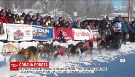 На Алясці стартували знані перегони на собачих упряжках