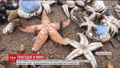 Из-за аномальных морозов в Великобритании погибли тысячи морских звезд