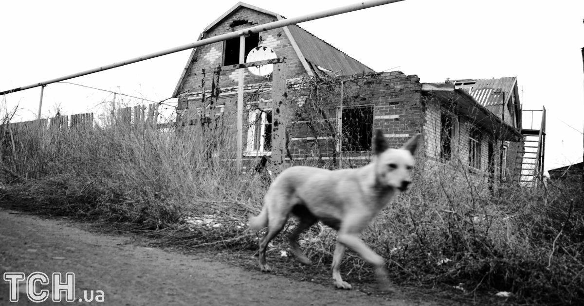 """Так выглядит сейчас Широкино. Разбитые улицы. Уцелевших домов почти нет. Зато очень много животных, собак, кошек, которые стараются прибиваться к военным. @ Дмитрий Мороз/Журналист """"Спецкор"""""""