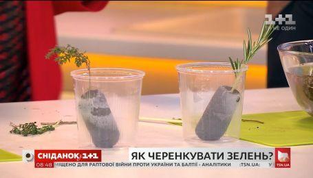 Наталя Підлісна розповіла про розмноження рослин живцями
