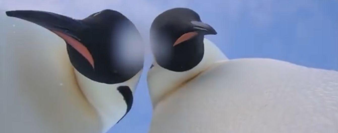 В Антарктиде любознательные пингвины сделали видеоселфи