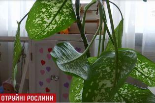 """У Сумах кімнатна рослина """"відправила"""" 1,5-річного малюка до реанімації"""