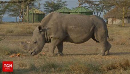 Последний белый носорог в мире умер