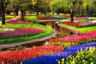 """Королевский """"Сад Европы"""" с тысячами тюльпанов откроется недалеко от Амстердама"""
