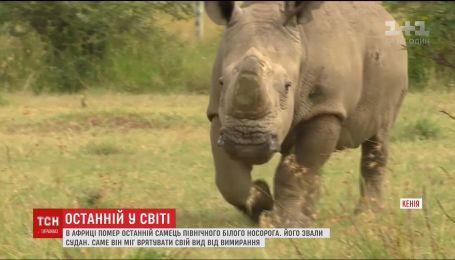 В Африці помер останні білий носоріг