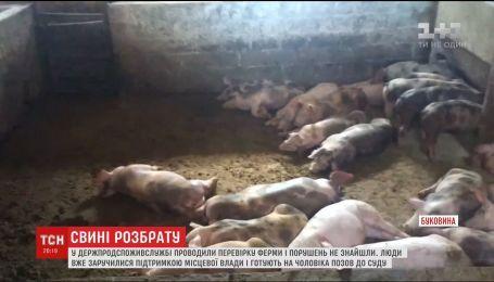 На Буковине мужчина организовал подпольную свиноферму среди городка