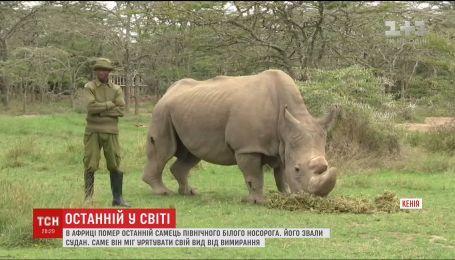 В Африке умер последний представитель северных белых носорогов