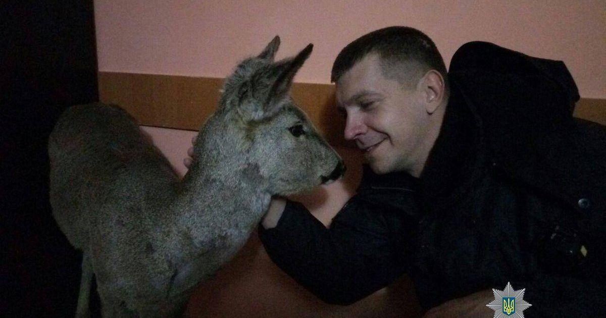 @ Twitter / МВС України