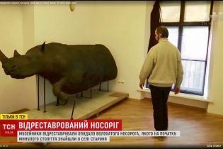 У Львові відновили зовнішність волохатого носорога, який колись давно блукав Карпатами
